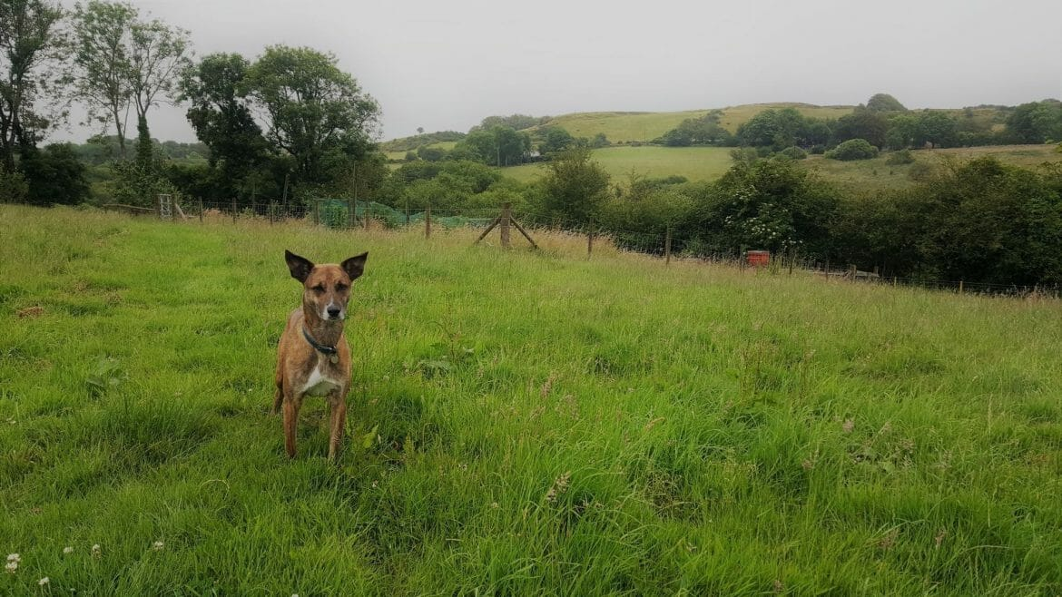 Dog Friendly Holiday Cottage in West Wales